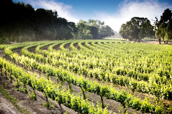 Lodi-wine-country-tour